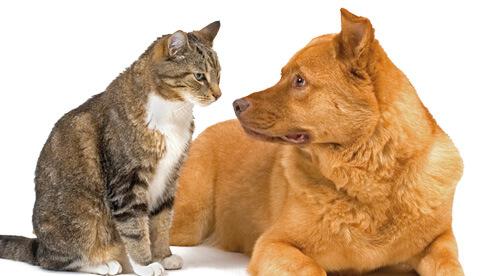 Cat help dog